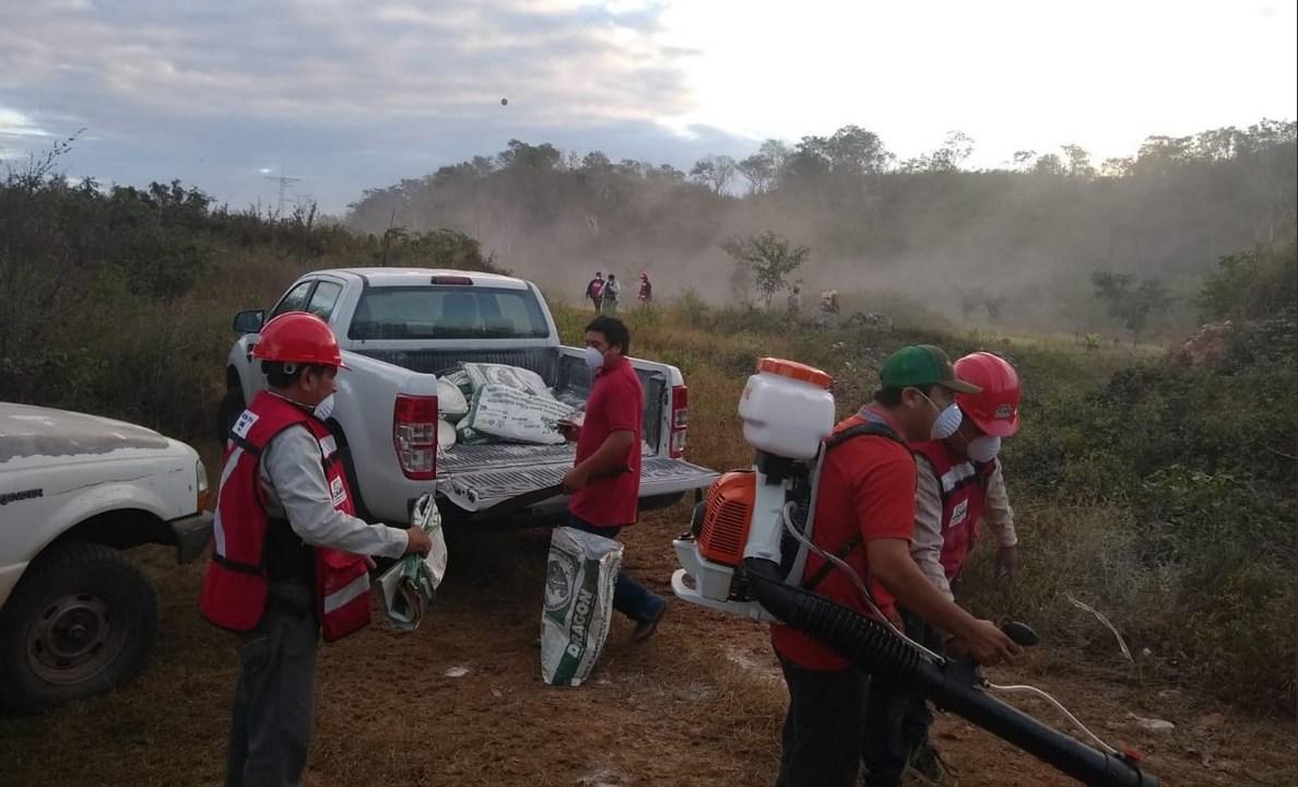 Plaga langostas Campeche afectan biosfera Los Petenes