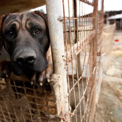¿Por qué hay gente que maltrata animales? Psicólogos dan su explicación