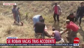 Decenas de personas roban vacas de un camión en Veracruz