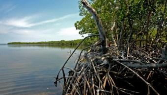 Humedales de Campeche, en riesgo de desaparecer