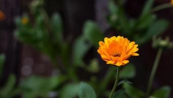 Planta Mercadela, Propiedades, Anticancerígenas, IPN