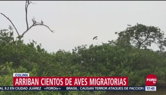 Colima, Refugio De Aves Migratorias, Invierno, Bajas Temperaturas