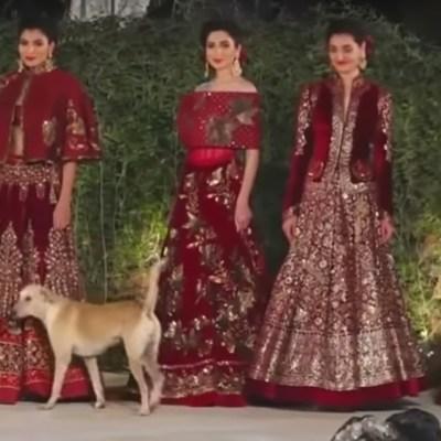 VIDEO: Perrito irrumpe en desfile de modas