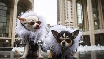 Foto: Los Chihuahuas Kimba y Bogie portan ropa especial para perros, Nueva York, 15 febrero, 2015 (Archivo/Reuters)
