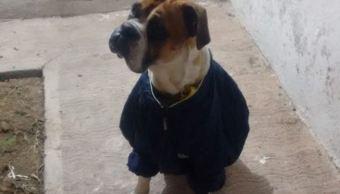 Piden justicia para perro que murió asesinado con cohetes