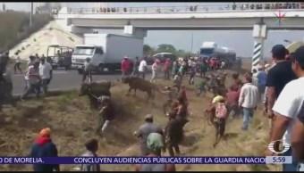 Pobladores de Veracruz roban ganado de tráiler accidentado