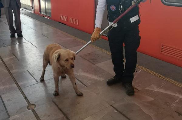 Protección Civil logró rescatar al perro, tras lo cual lo llevaron sobre el andén con un representante de organizaciones protectoras de los animales (Heraldo de México)