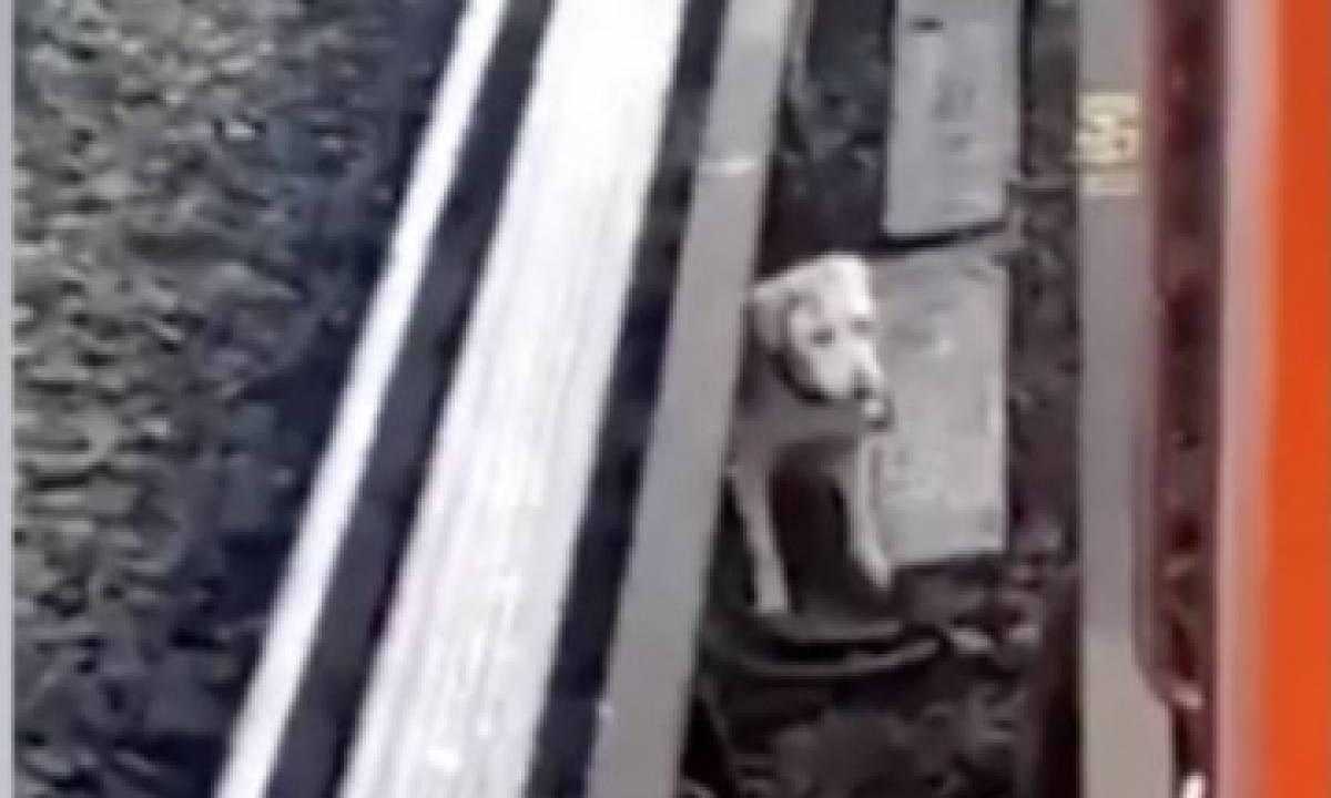 Rescatan a perro atrapado en vías de Lína B del Metro