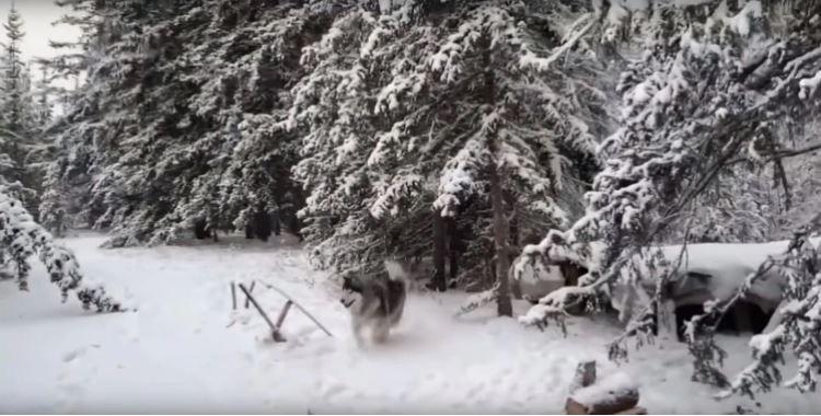 Timofey no vive solo, pues tiene dos perros y un gato en su choza (YouTube)