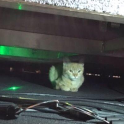 Un gato se cuela a la conferencia de prensa de AMLO
