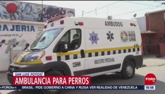 Ambulancia para perros en San Luis Potosí