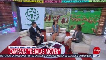 Campaña 'Déjalas mover' en México