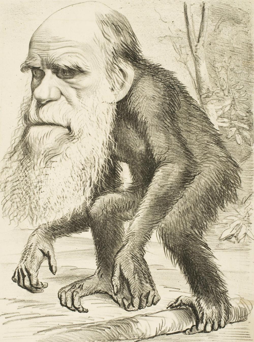 Antecedentes-Teoría-Evolución-Darwin-Wallace-Como-Evolucionan-Especies-Charles-Teoria-Evolucion-nacio-Origen-Especies, Ciudad de México, 13 de febrero 2019