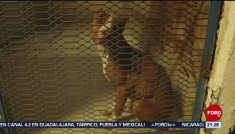 Foto: Obligaciones Legales Dueños Mascota Cdmx27 de Febrero 2019