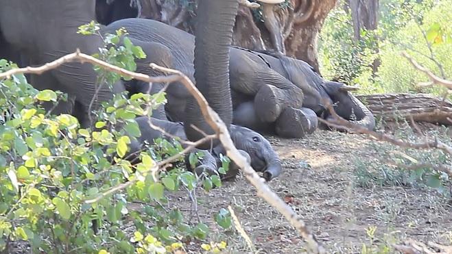 foto elefante parque sudafrica