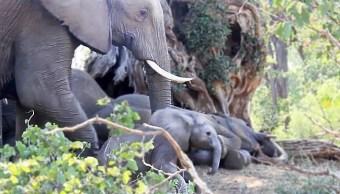 foto mamá elefante despierta a su bebé 19 febrero 2019