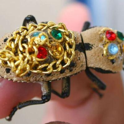 ¡No regales escarabajo maquech en San Valentín!; Yucatán busca protegerlos
