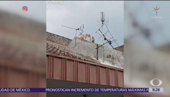 Gatos pelean y caen del techo de una casa