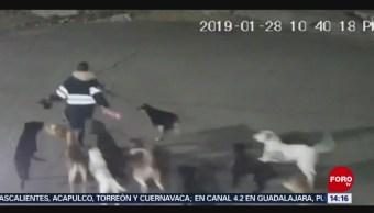 FOTO: Hallan cuerpo de mujer atacada por jauría en Edomex, 2 febrero 2019