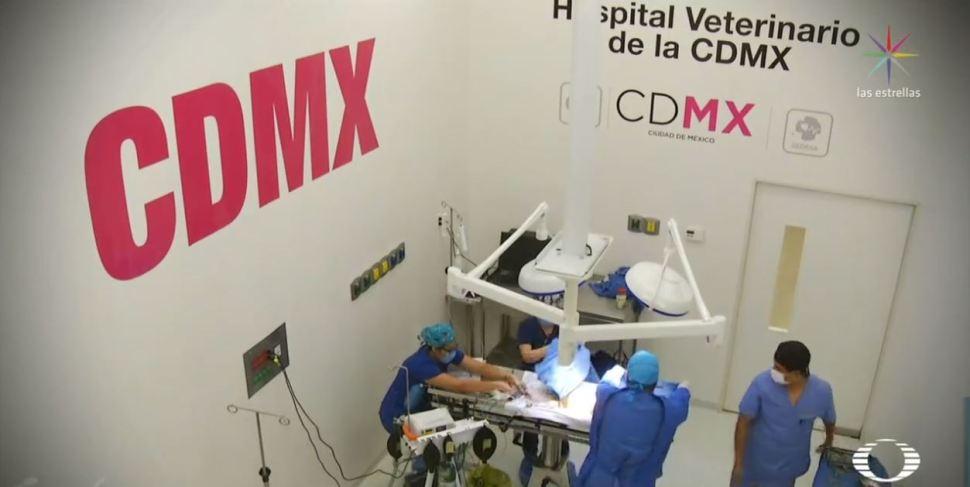 Foto: Hospital Veterinario de la CDMX inicia regulación de servicios 19 febrero 2019