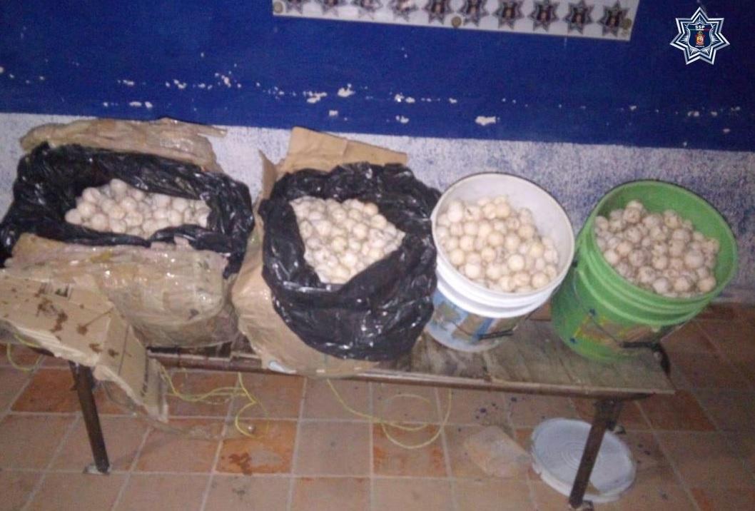 Foto: Detienes a mujer por robo de huevos de tortuga, 26 de febrero 2019. Twitter @SSP_GobOax