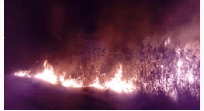 Foto: Incendio de pastizales, México