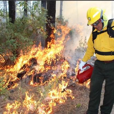 Prohíben quemas agrícolas en Chiapas para evitar incendios forestales