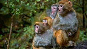 Foto: Promueven conservación de monos en peligro de extinción, 15 de febrero 2019. Getty Images