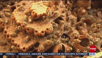 FOTO: Mujeres protegen a abejas meliponas en Yucatán, 10 febrero 2019