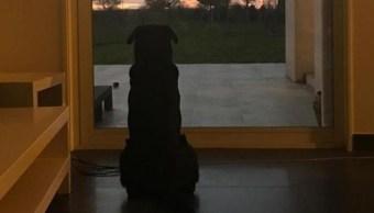 Nala, la perrita de Emiliano Sala que aún espera su regreso