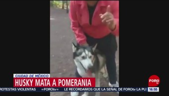 Foto: Perro Mata Perro Parque Hundido Cdmx 18 de Febrero 2019