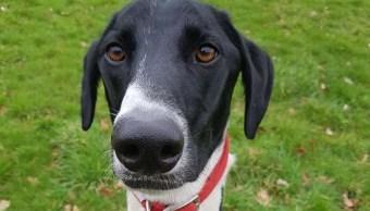 Perro-solitario-albergue-animal-adopcion-perros-Hector