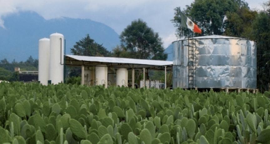 Foto México inaugura su primera planta que genera electricidad y biogas con nopal 28 febrero 2019