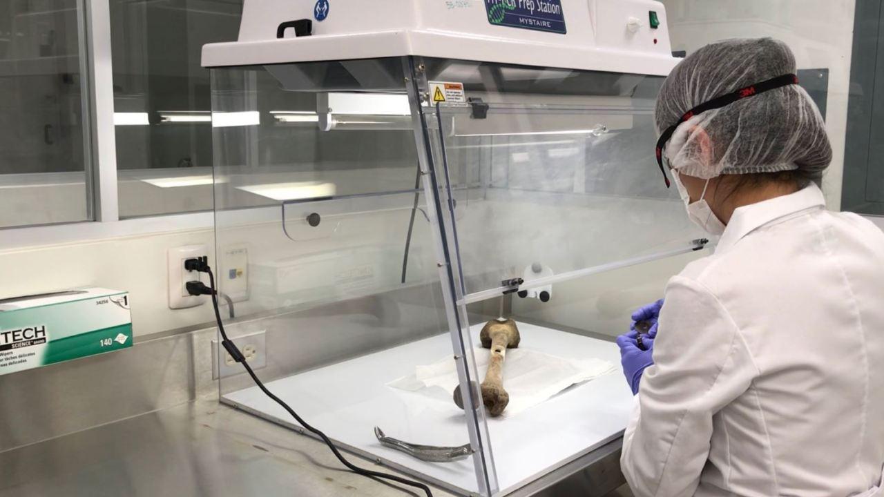 inician pruebas identificar cuerpos localizados fosas tecoman colima