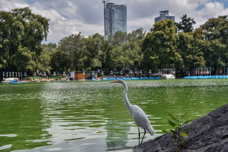 Foto Ocho bosques de la Ciudad de México que debes conocer 13 marzo