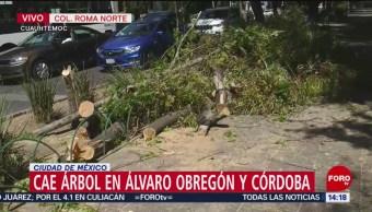 FOTO: Cae árbol en Álvaro Obregón y Córdoba, 25 marzo 2019