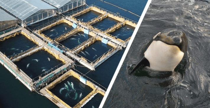 FOTO Leonardo DiCaprio expone a Rusia por cárcel de ballenas Greenpeace marzo 2019 rusia