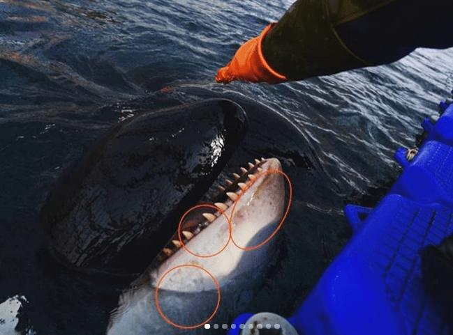 FOTO Leonardo DiCaprio expone a Rusia por cárcel de ballenas (Greenpeace marzo 2019 rusia