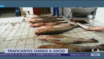 China procesa a red de traficantes de totoaba desde México