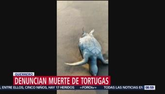 Denuncian muerte de tortugas en Guerrero