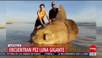 Encuentran ejemplar de pez luna gigante en Australia