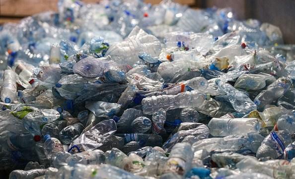 encuentran 40 kilos de plastico en estomago de ballena muerta