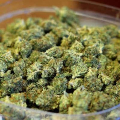 ¿Cómo va el tema de la legalización de la marihuana en México?