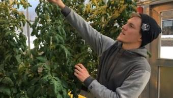 Foto: Colton Welch, estudiante de tercer año de la Universidad Estatal de Nueva York cuida plantas hidropónicas que proporcionarán datos aplicables al cultivo de cannabis, marzo 4 de 2019 (AP)