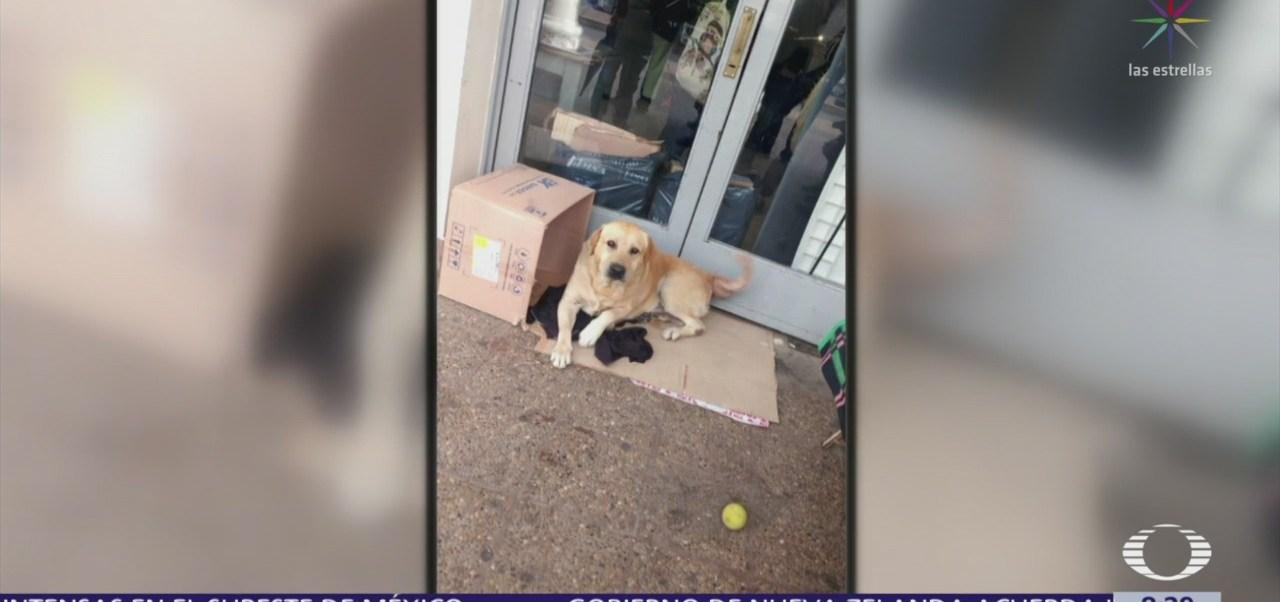 FOTO: Perro espera afuera de hospital a dueño muerto, 18 marzo 2019