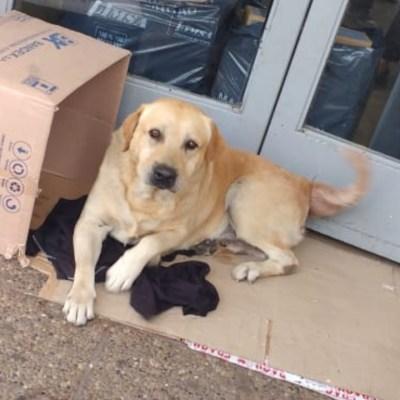 Perrito espera a su dueño afuera del hospital sin saber que murió hace una semana