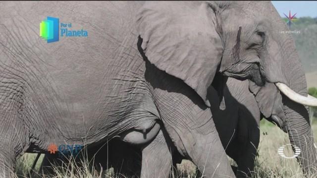 Foto: Por El Planeta: El Elefante Africano 1 de Marzo 2019