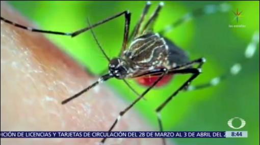 ¿Qué peligros puede causar el piquete de un mosquito?
