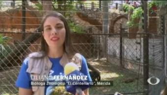 FOTO: Veterinarios de Mérida refrescan a animalitos con paletas heladas, 8 marzo 2019