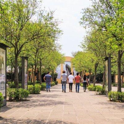 Gabriel Orozco dirigirá gratis proyecto de la 4ta sección del Bosque de Chapultepec